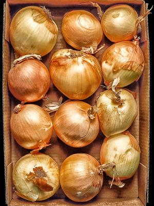 Onions in a Box